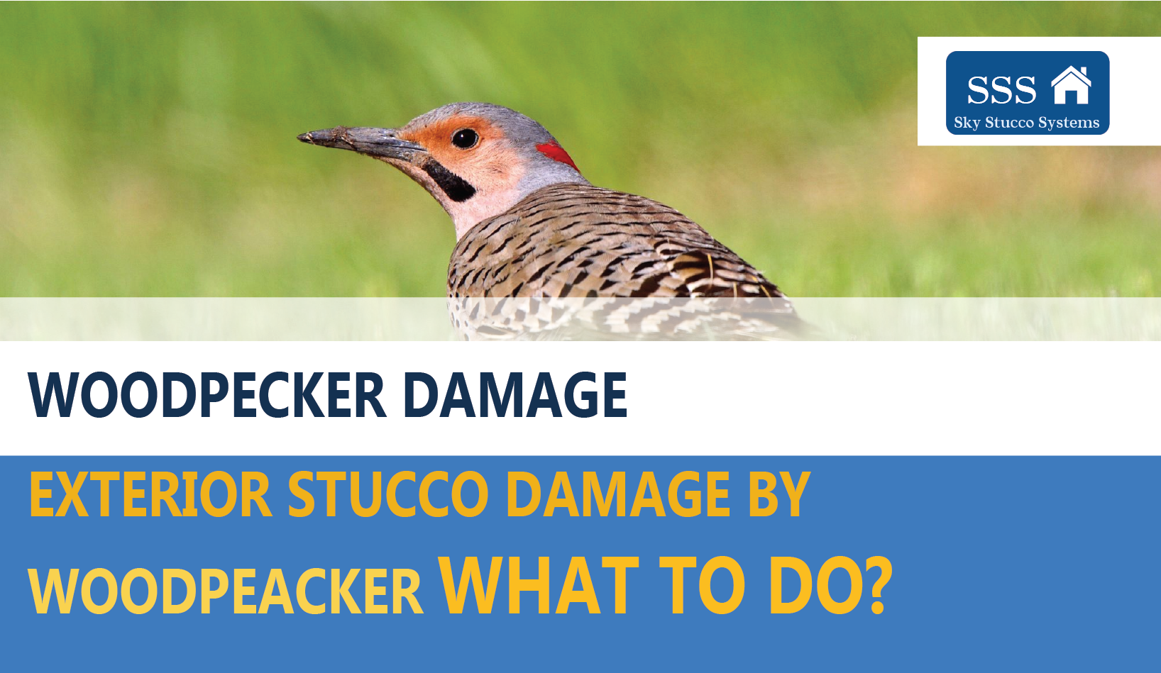 Woodpecker Stucco Damage, what to do now in 2020? Toronto Canada. Sky Stucco Systems.ca Sky stucco systems